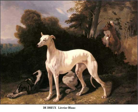 1810 1860 alfred de dreux levrier blanc