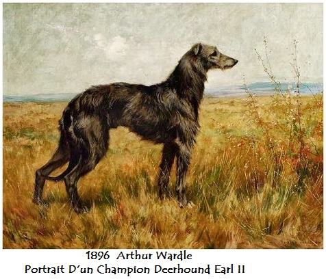 1896 arthur wardle portrait d un champion deerhound earl ii