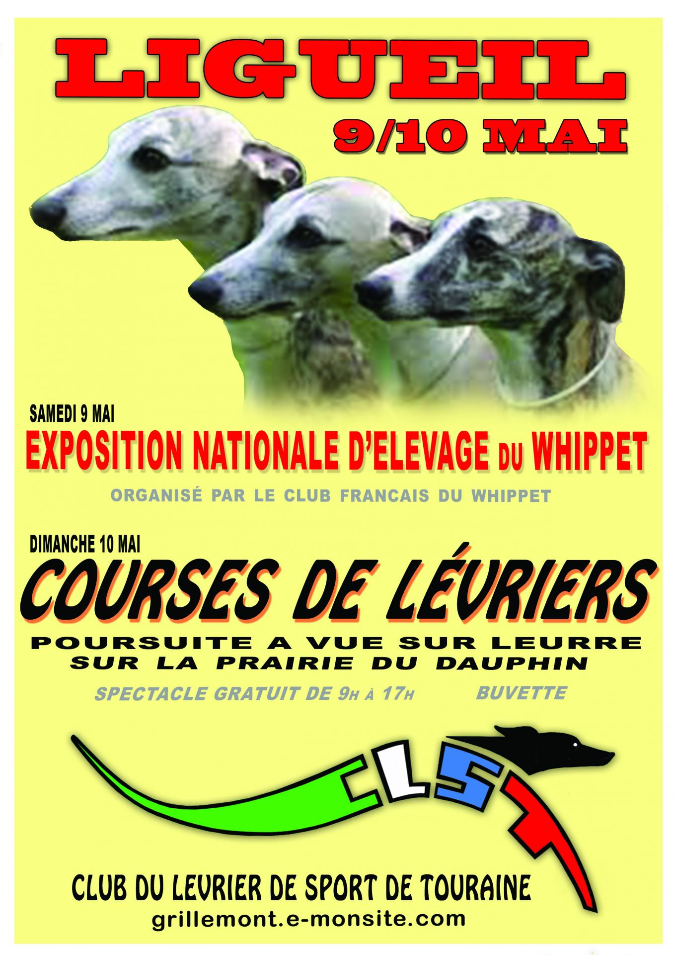 Nationnale whippet du 24 02