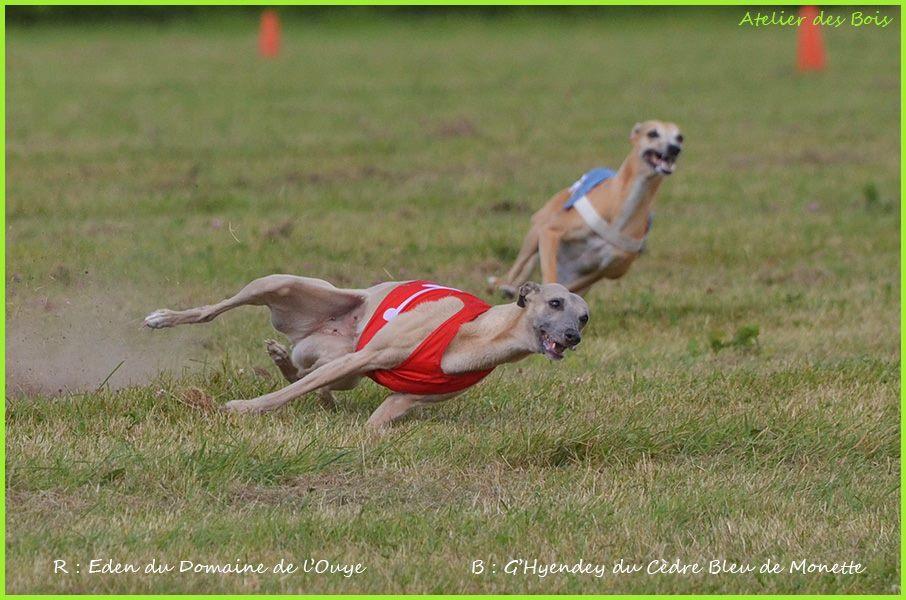 Whippet roche posay